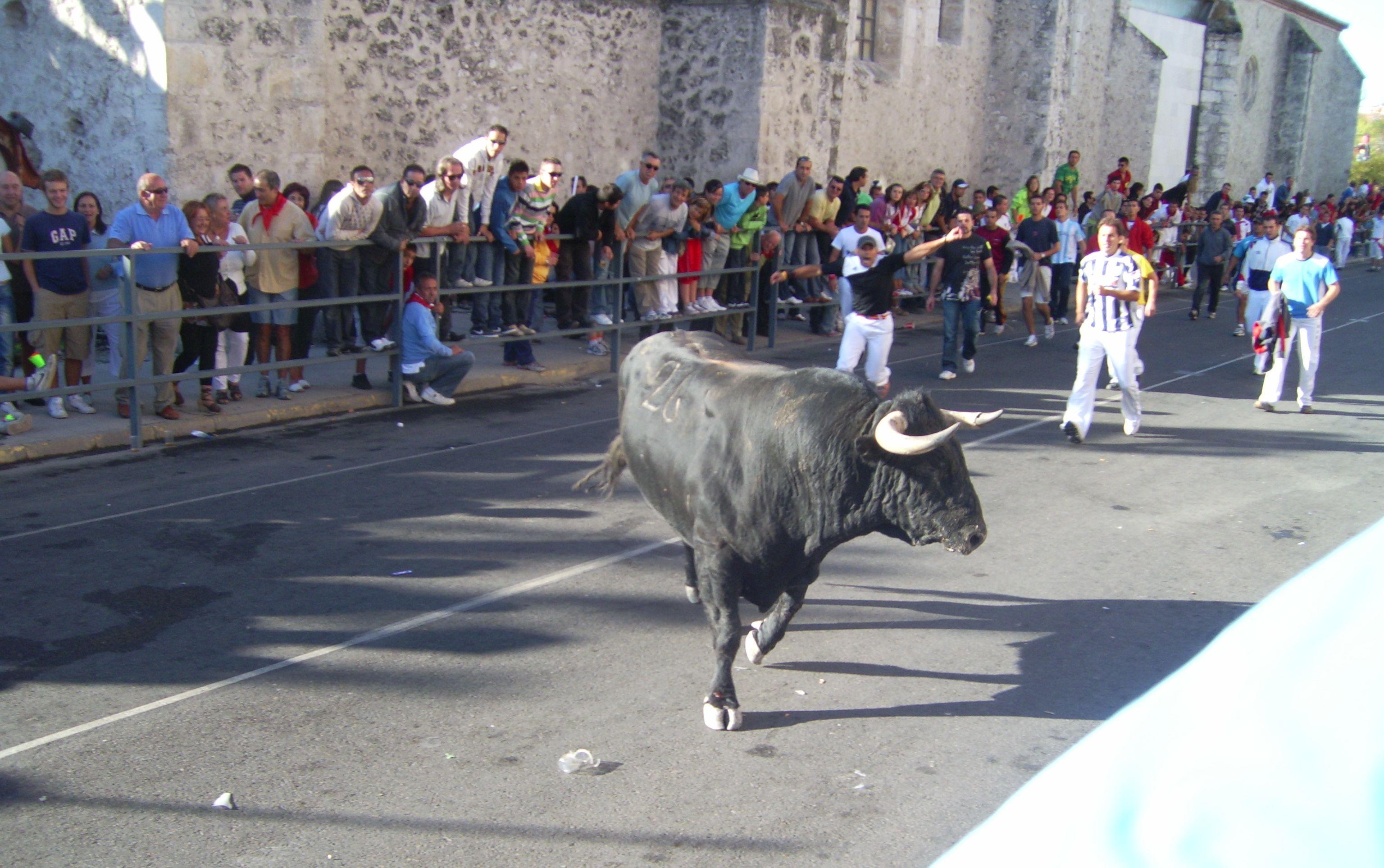 Los toros de uno en uno y despacio para que los veamos bien